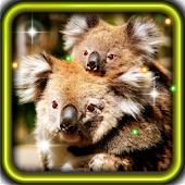 Koala Bear live wallpaper