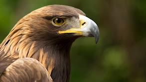 Eagle Power thumbnail