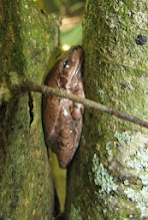 Photo: Napping frog.