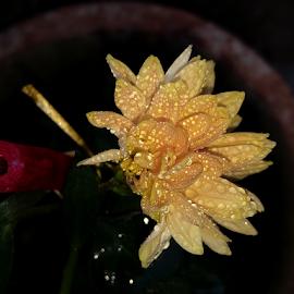 Flower by Vivek Sharma - Instagram & Mobile Android ( vivekclix, rain, mobilography, nature, raindrops, yellow, mobile, mobile photos, flower,  )