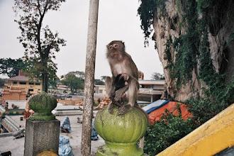 Photo: #012-Kuala Lumpur-Grottes de Batu