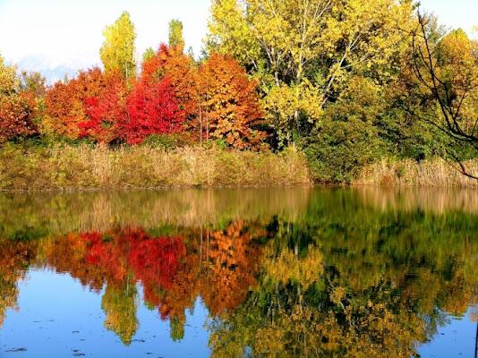 Colori d'autunno di mirtilloblu