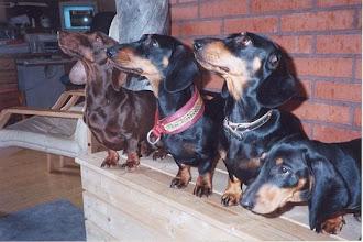 Photo: 2001 Äijä, Natsi, Ansa ja Ressu