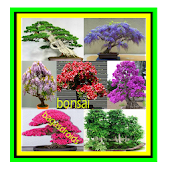Bonsai plant ideas