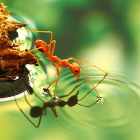 'so cold' by Lessy Sebastian - Animals Insects & Spiders ( mirror, cold, ant, cute )