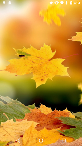 秋のライブ壁紙(無料)