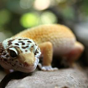 by Faisal Korep - Animals Reptiles