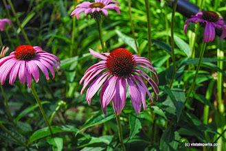 Photo: Flowers at Gifford Woods State Park by Carolyn Dean