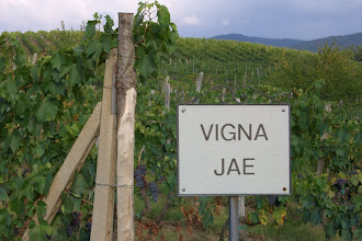 Photo: The vineyard behind our villa in Chianti, Italy - Each vineyard has a name, as you see here