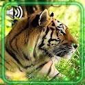 Wild Tiger Live Wallpaper icon