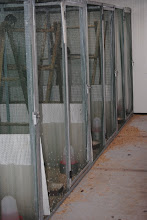 Photo: indoor view at the in isolation unit meant for export of exotic pheasants at Peer, Belgium