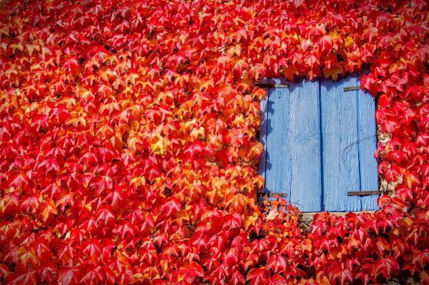.the blue window  di Concetta Caracciolo