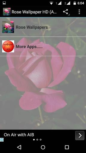 Rose HD Wallpaper