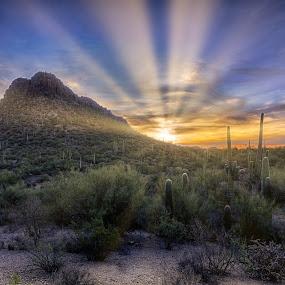 Saguaro National Park by Charlie Alolkoy - Landscapes Deserts ( desert, sunset, arizona, tucson, sunrise, saguaro, cactus )
