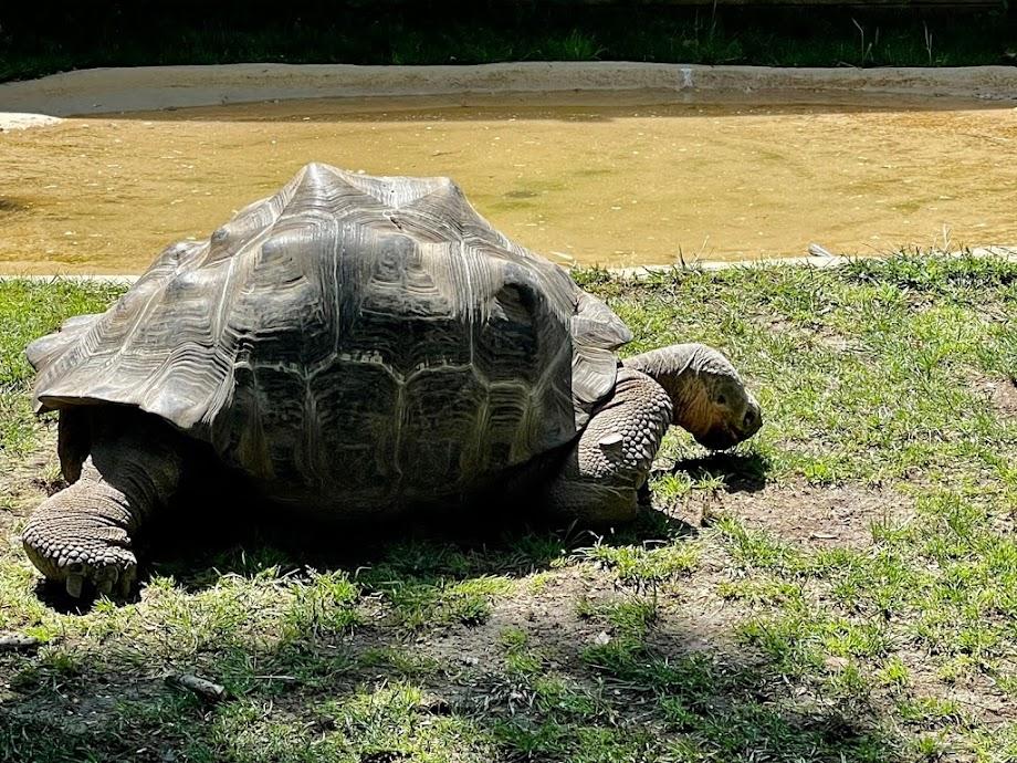 Foto Zoo Barcelona 18