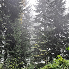 Into the woods by Boban Buliga - Landscapes Forests ( #nature #naturelovers #natureonly #natureza #tagsforhearts #nature_seekers #nature_shooters #nature_perfection #natureporn #naturestyles_gf #naturephotography #nature_obsession #lifeinism #naturehippys #naturegram #nature_lovers #naturel #naturewalk #naturewhisperers #naturepolis #natureshot #natureshots #naturevalley #naturehub )