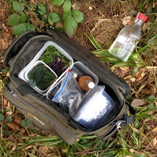 Spring Woodland & Coastal Foraging and Wild Garlic Pesto Pinwheels