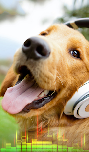 Can Phones Play Dog Tones