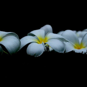 Fallen by Mark Pope - Nature Up Close Flowers - 2011-2013 ( fallen, pedals, white, yellow, flowers,  )
