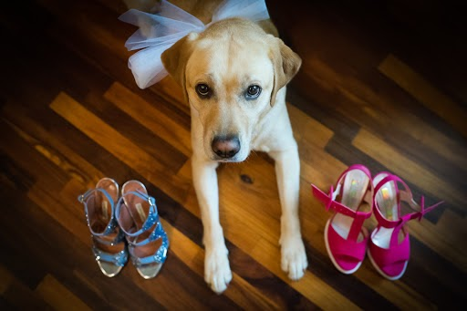Wedding photographer Barbara Fabbri (fabbri). Photo of 27.08.2015