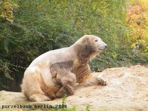Photo: Der Pelz juckt ;-)