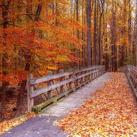 Autumn Path by Millieanne T - Buildings & Architecture Bridges & Suspended Structures