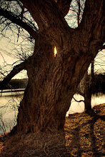 Photo: Just an old tree #365Project curated by +Simon Kitcher and +Susan Porter