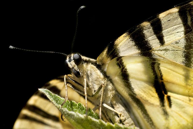 La farfalla spiegò le ali al vento ... ma non le capì di Utopia