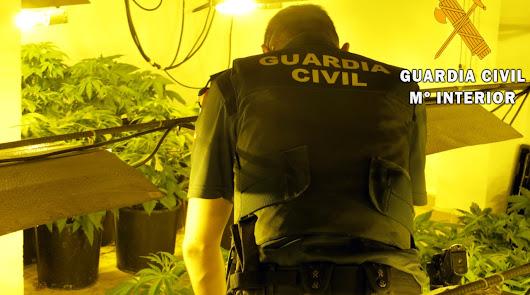 Benahadux: hallan 380 plantas de marihuana por los continuos cortes de luz