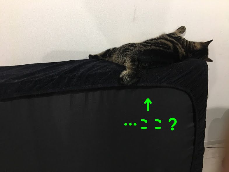 猫の睡眠時間はどれくらい?人間の2倍以上?寝過ぎる理由と良い睡眠環境について