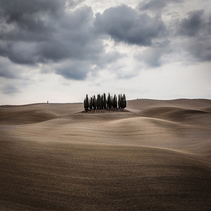 Cypresses in the waves of Tuscany di MarcoCorso