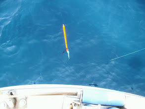 Photo: 船頭のウキも止ま・・    入ったー! ファイトの末、水面まではきたんですが、最後のアガキにあって、仕掛けを切っていきました。 メダイでした。