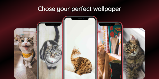 Cute Cat Wallpapers Hd Cool Cat Pictures App Store Data Revenue Download Estimates On Play Store