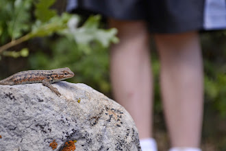 Photo: A lizard and his boy