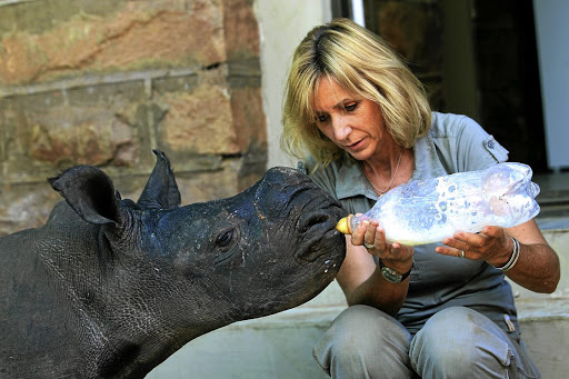 Not mother's milk: This two-month-old white rhino was struck by pangas and axes when her mother was poached earlier this week. Picture: SUNDAY TIMES