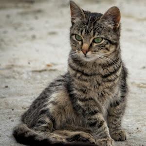 Cute CAt!.jpg