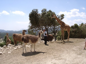 Photo: safari Aitana in Sella - Alicante - Spain