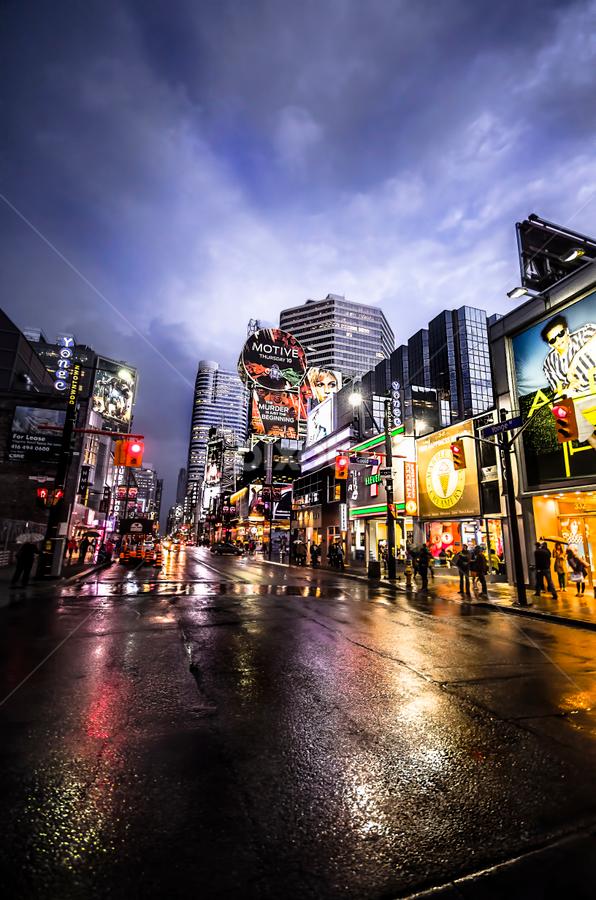 Toronto Night after a Storm by Sarah Hauck - City,  Street & Park  Street Scenes ( wet street, toronto, street, downtown, rain, city )