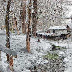Winter in my park by Marijan Škripač - Landscapes Forests ( winter, hdr, snow, trees, forest, bridge, river,  )