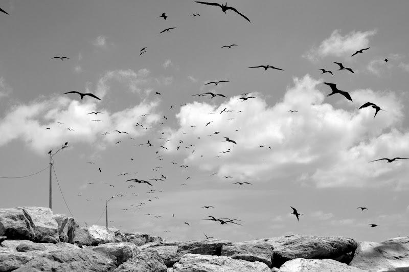 Gli uccelli di SeleneNic
