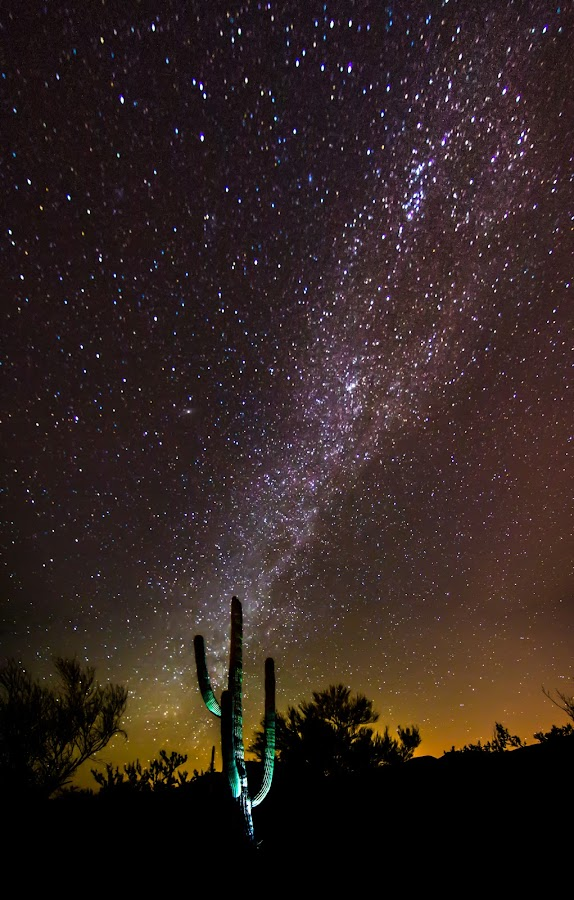 Cactus Milk by Ed Mullins - Landscapes Starscapes ( star field, desert, saguaro, milky way, night, lights,  )