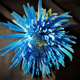 Blue flower by Mary Gallo - Flowers Single Flower (  )