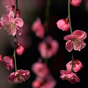 flower wallpaper free apk