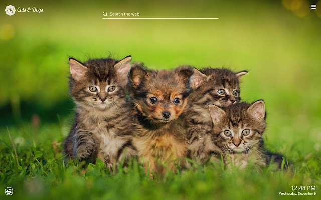 my cats dogs cute cat dog kitten wallpapers chrome web store