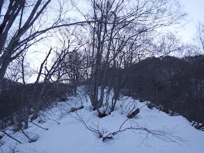 雪が少なく若干藪が