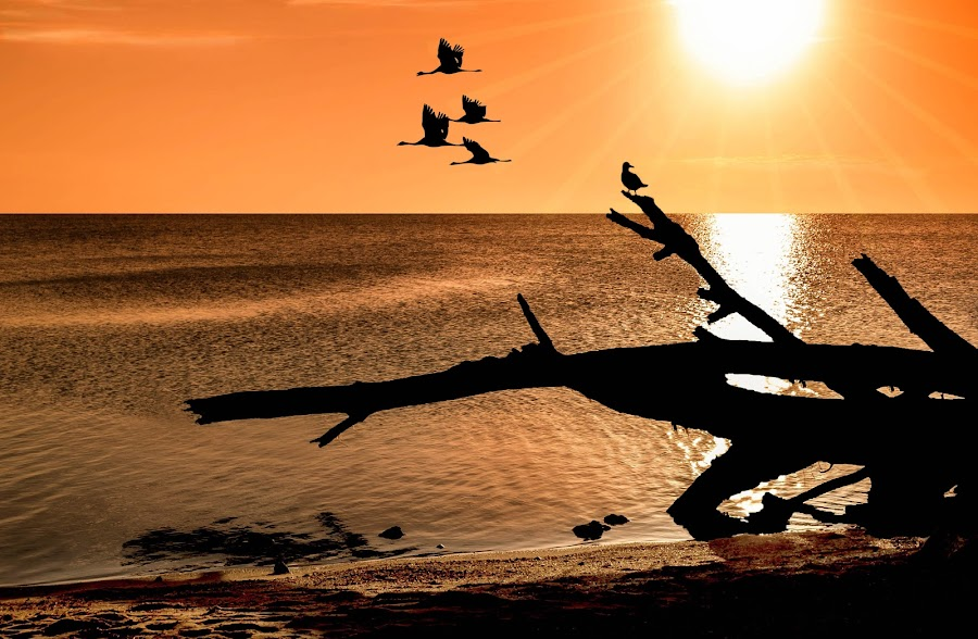 Silhouettes at Lake King by Jan Murphy - Digital Art Places ( orange, driftwood, sunset, australia, gippsland, lake, birds,  )