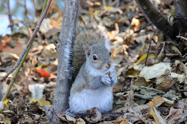 Tenero sguardo dello scoiattolo di ScrofaniRosaria