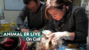 Animal ER Live: On Call thumbnail