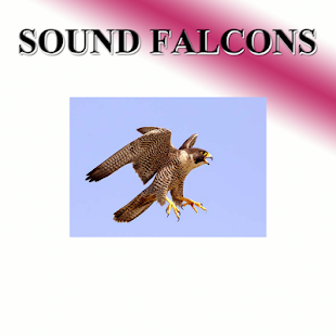 Hawk sounds to birds - náhled