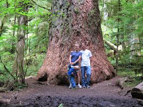 Photo: B.A.T. (aka. Big Ass Tree)